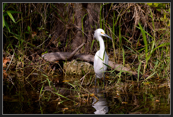Everglades Natl Park Florida Area - Jan 2017 - 14